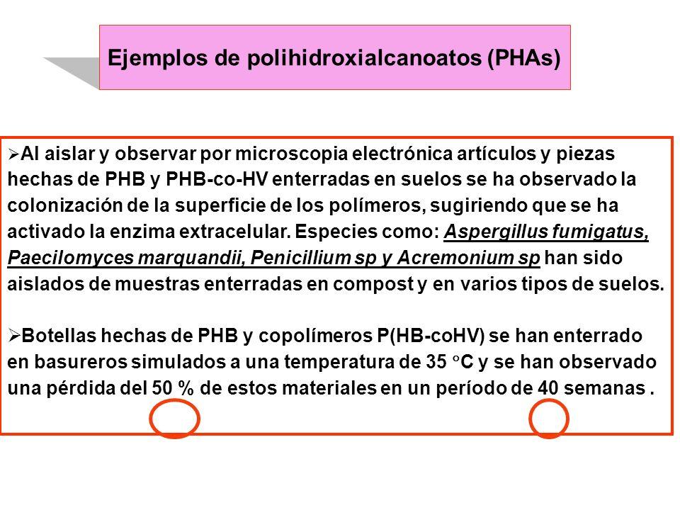 Ejemplos de polihidroxialcanoatos (PHAs) Al aislar y observar por microscopia electrónica artículos y piezas hechas de PHB y PHB-co-HV enterradas en s