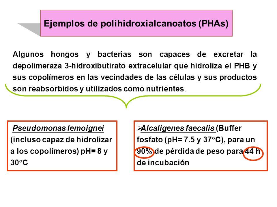 Algunos hongos y bacterias son capaces de excretar la depolimeraza 3-hidroxibutirato extracelular que hidroliza el PHB y sus copolímeros en las vecind