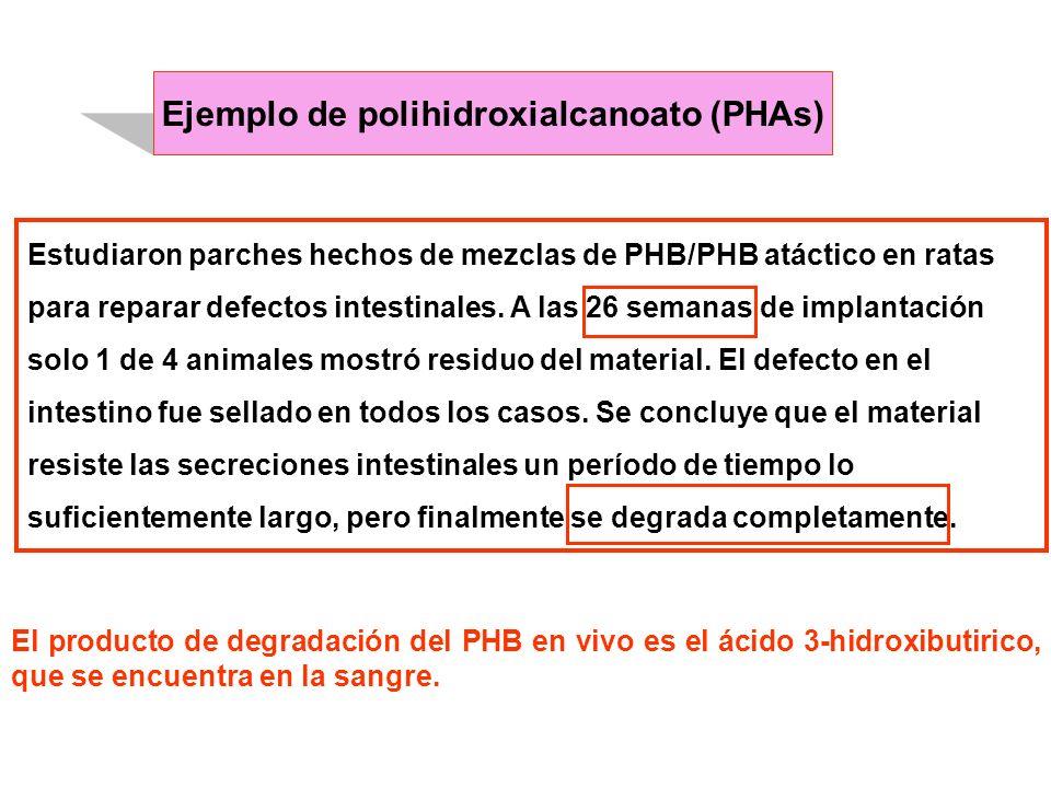 Estudiaron parches hechos de mezclas de PHB/PHB atáctico en ratas para reparar defectos intestinales. A las 26 semanas de implantación solo 1 de 4 ani