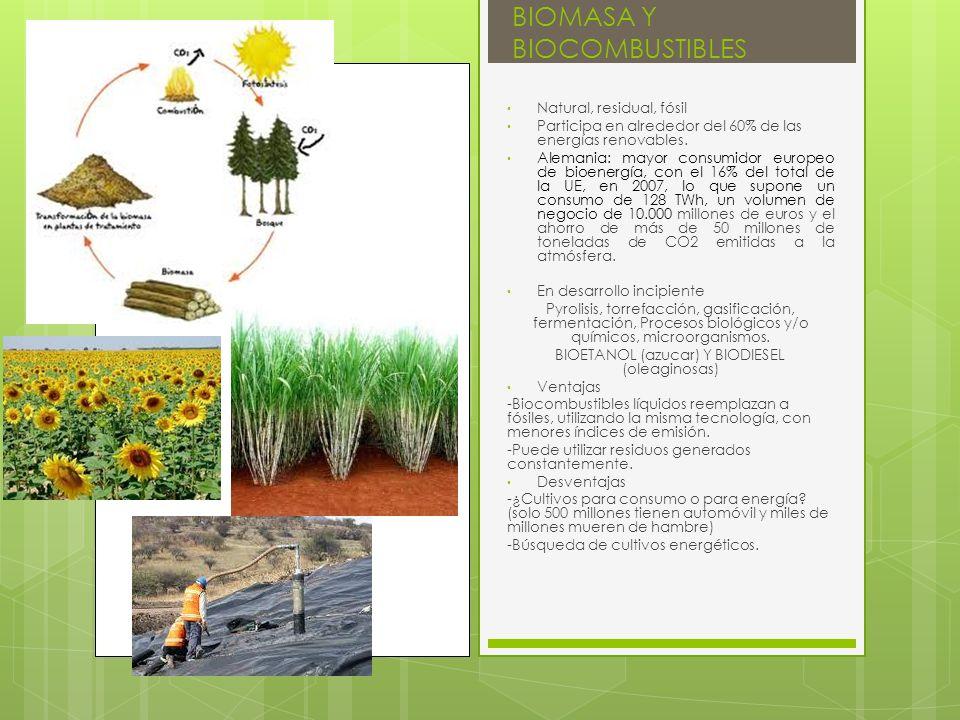 BIOMASA Y BIOCOMBUSTIBLES Natural, residual, fósil Participa en alrededor del 60% de las energías renovables. Alemania: mayor consumidor europeo de bi