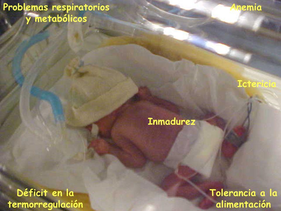 Inmadurez Problemas respiratorios y metabólicos Déficit en la termorregulación Tolerancia a la alimentación Ictericia Anemia