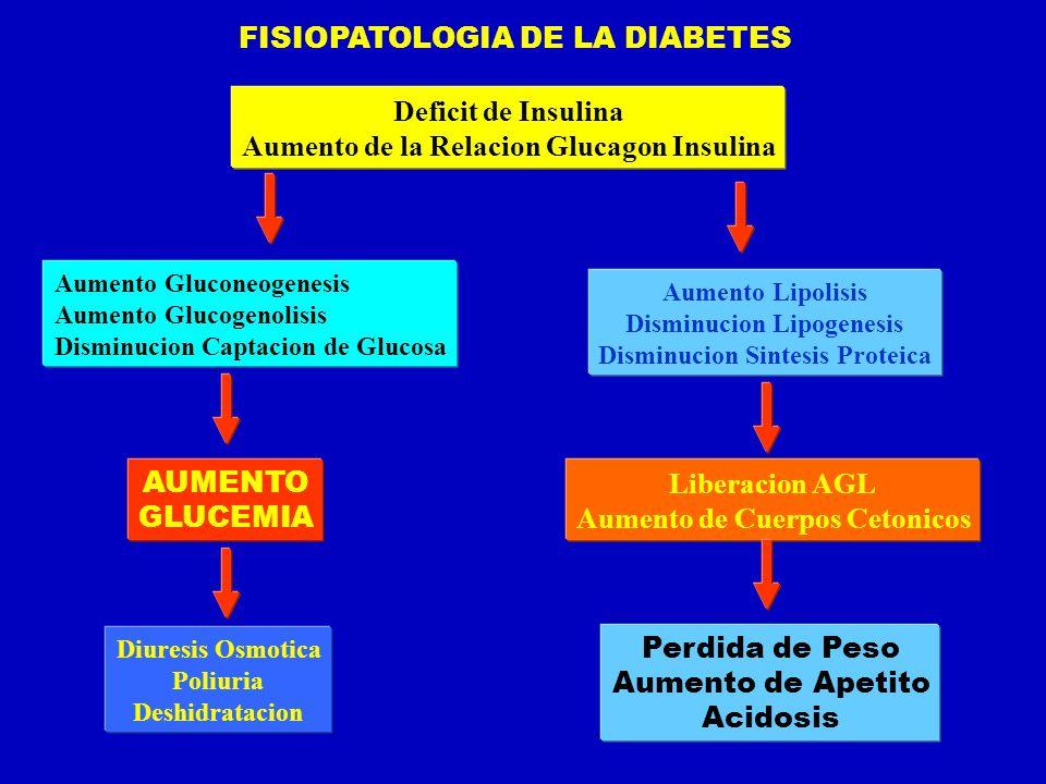 FISIOPATOLOGIA DE LA DIABETES Deficit de Insulina Aumento de la Relacion Glucagon Insulina Aumento Gluconeogenesis Aumento Glucogenolisis Disminucion