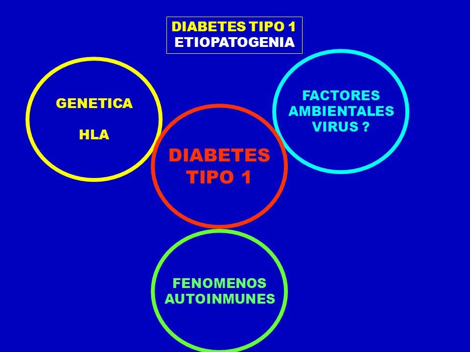 ETIOPATOGENIA GENETICA HLA FENOMENOS AUTOINMUNES FACTORES AMBIENTALES VIRUS ? DIABETES TIPO 1