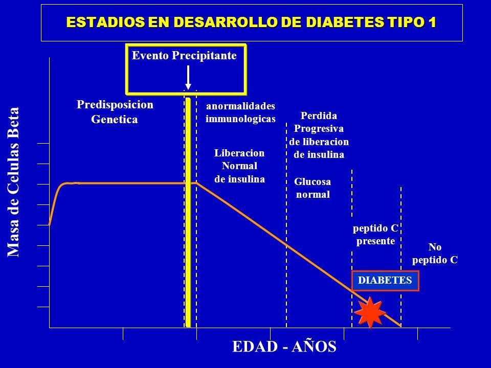 ESTADIOS EN DESARROLLO DE DIABETES TIPO 1 EDAD - AÑOS Predisposicion Genetica Masa de Celulas Beta Evento Precipitante anormalidades immunologicas Lib