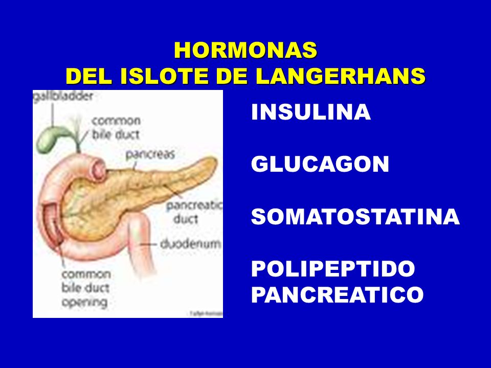HORMONAS DEL ISLOTE DE LANGERHANS INSULINA GLUCAGON SOMATOSTATINA POLIPEPTIDO PANCREATICO
