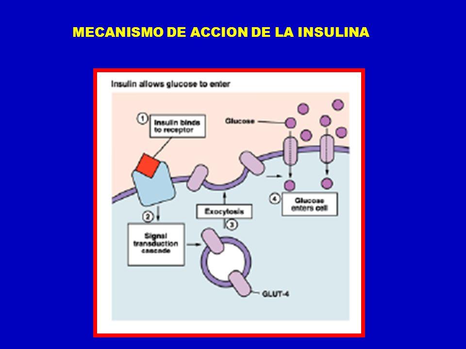 MECANISMO DE ACCION DE LA INSULINA