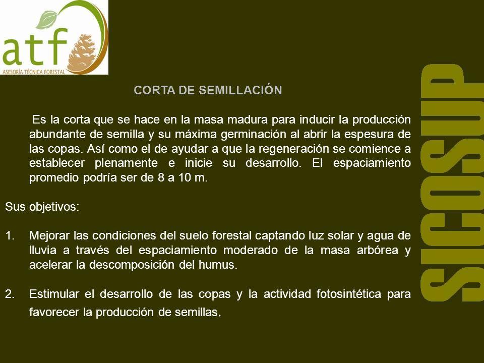 CORTA DE SEMILLACIÓN Es la corta que se hace en la masa madura para inducir la producción abundante de semilla y su máxima germinación al abrir la espesura de las copas.