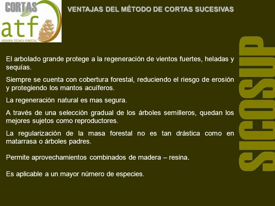 CORTAS VENTAJAS DEL MÉTODO DE CORTAS SUCESIVAS El arbolado grande protege a la regeneración de vientos fuertes, heladas y sequías.