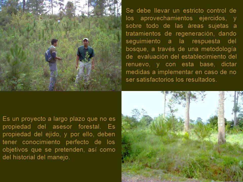 Es un proyecto a largo plazo que no es propiedad del asesor forestal.