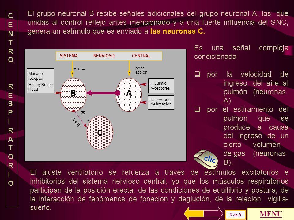 SISTEMA NERVIOSO CENTRAL AB poca acción o + - Mecano receptor Hering-Breuer Head Receptores de irritación Quimio receptores El conjunto neuronal A aum