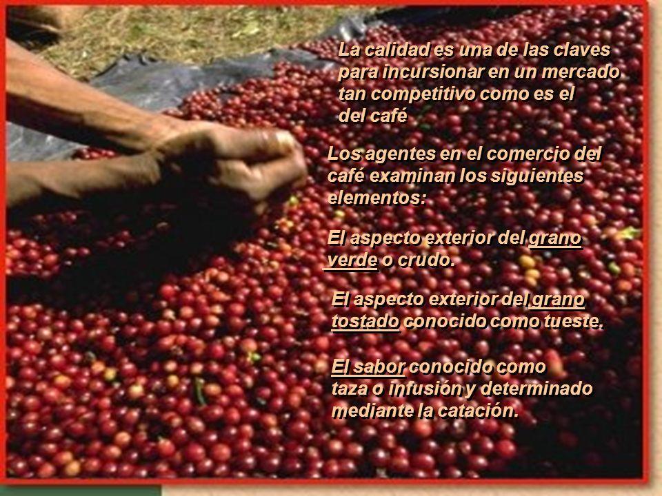 ¡Entre más alto mejor! es la regla de oro del café gourmet. ¡Entre más alto mejor! es la regla de oro del café gourmet. El clima de las alturas produc