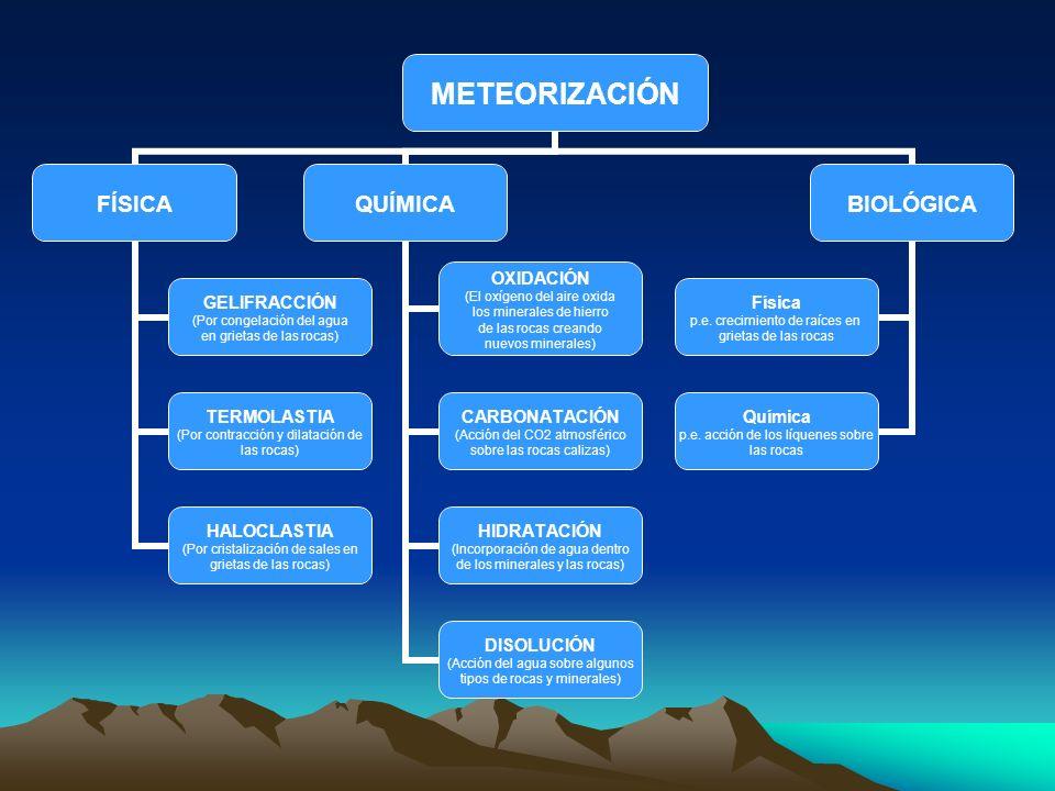 METEORIZACIÓN FÍSICA GELIFRACCIÓN (Por congelación del agua en grietas de las rocas) TERMOLASTIA (Por contracción y dilatación de las rocas) HALOCLAST