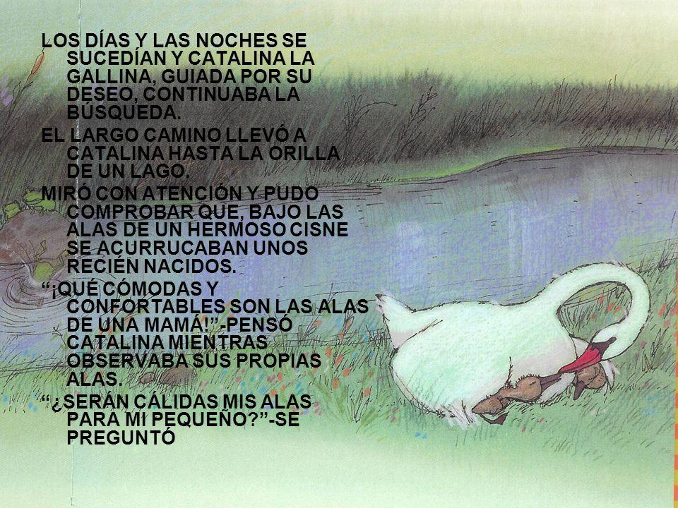 LOS DÍAS Y LAS NOCHES SE SUCEDÍAN Y CATALINA LA GALLINA, GUIADA POR SU DESEO, CONTINUABA LA BÚSQUEDA. EL LARGO CAMINO LLEVÓ A CATALINA HASTA LA ORILLA