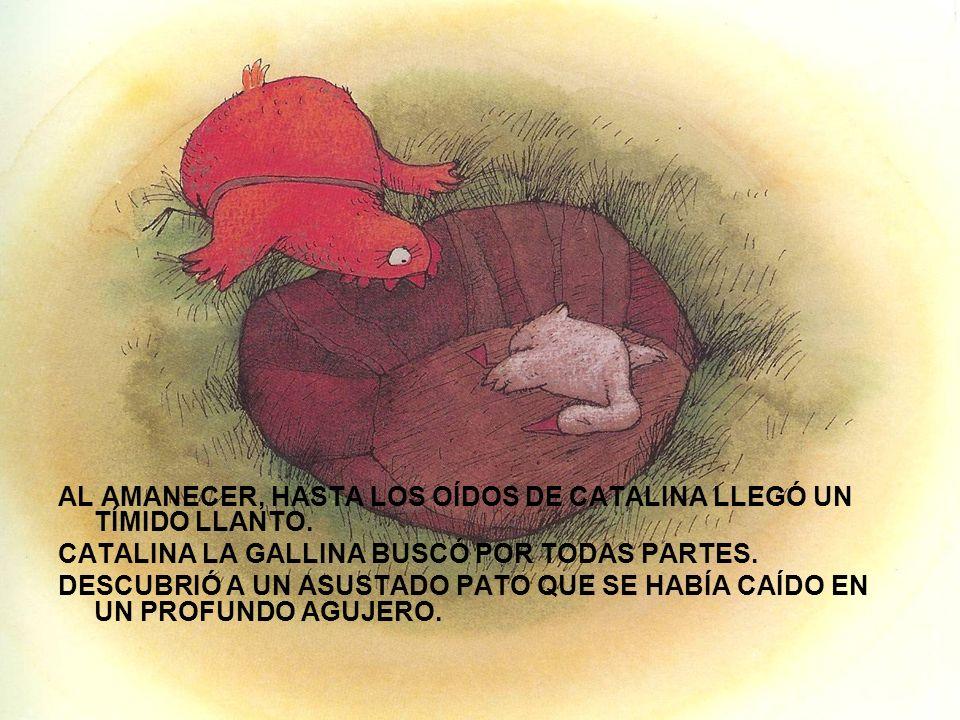 AL AMANECER, HASTA LOS OÍDOS DE CATALINA LLEGÓ UN TÍMIDO LLANTO. CATALINA LA GALLINA BUSCÓ POR TODAS PARTES. DESCUBRIÓ A UN ASUSTADO PATO QUE SE HABÍA