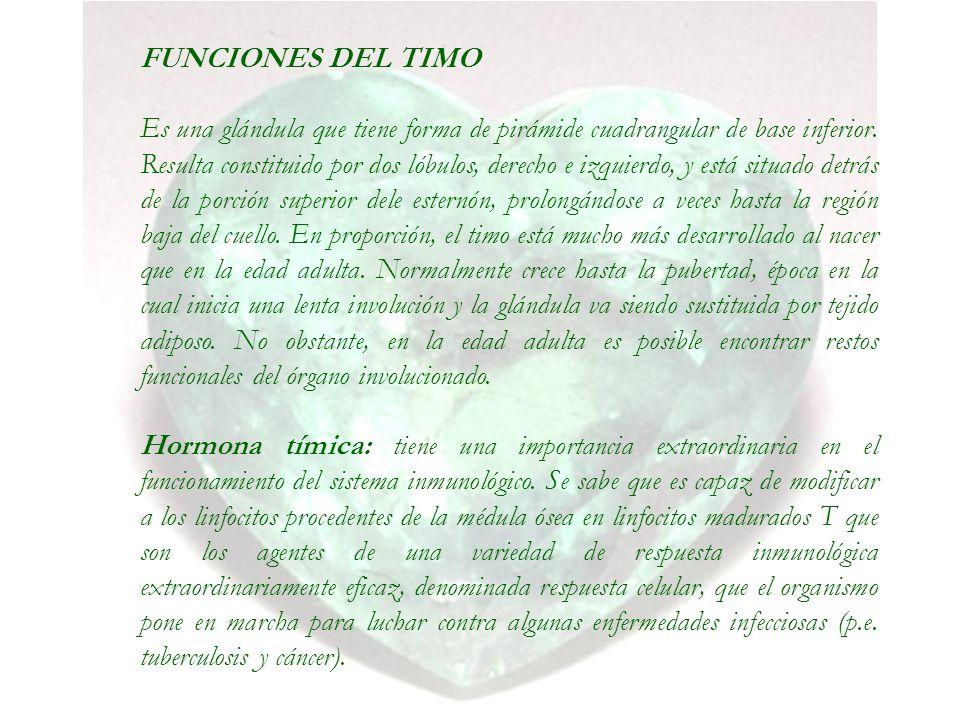FUNCIONES DEL TIMO Es una glándula que tiene forma de pirámide cuadrangular de base inferior. Resulta constituido por dos lóbulos, derecho e izquierdo