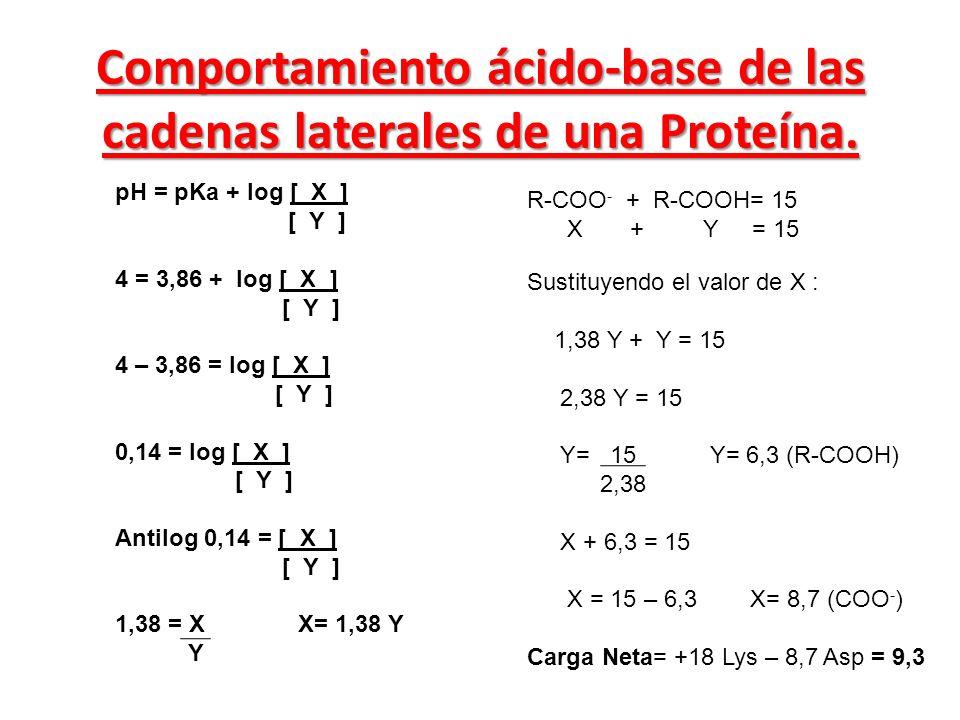 Comportamiento ácido-base de las cadenas laterales de una Proteína. R-COO - + R-COOH= 15 X + Y = 15 pH = pKa + log [ X ] [ Y ] 4 = 3,86 + log [ X ] [
