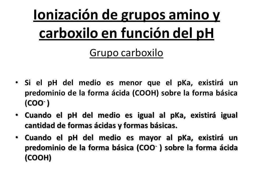 Ionización de grupos amino y carboxilo en función del pH Grupo carboxilo COO - ) Si el pH del medio es menor que el pKa, existirá un predominio de la
