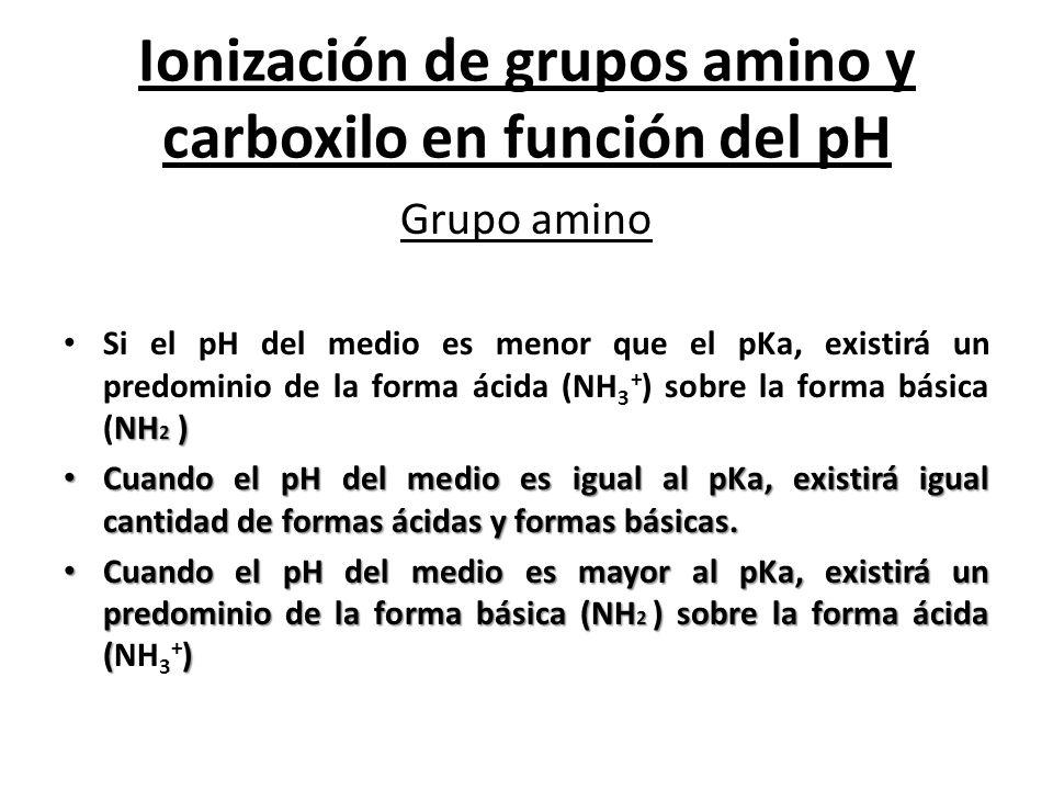 Ionización de grupos amino y carboxilo en función del pH Grupo amino NH 2 ) Si el pH del medio es menor que el pKa, existirá un predominio de la forma