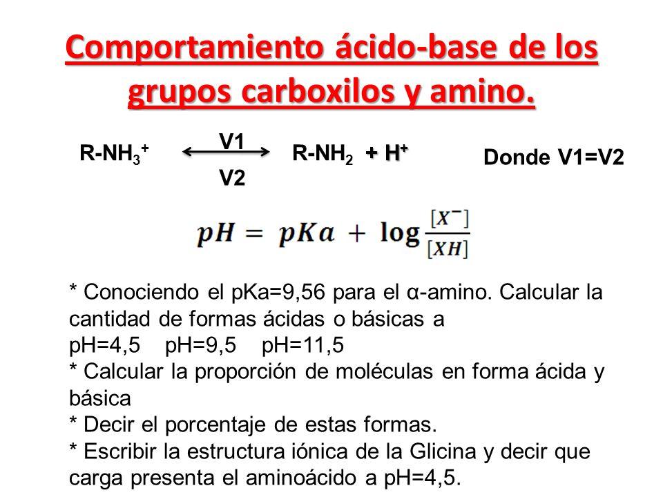 + H + R-NH 3 + R-NH 2 + H + V1 V2 Donde V1=V2 Comportamiento ácido-base de los grupos carboxilos y amino. * Conociendo el pKa=9,56 para el α-amino. Ca