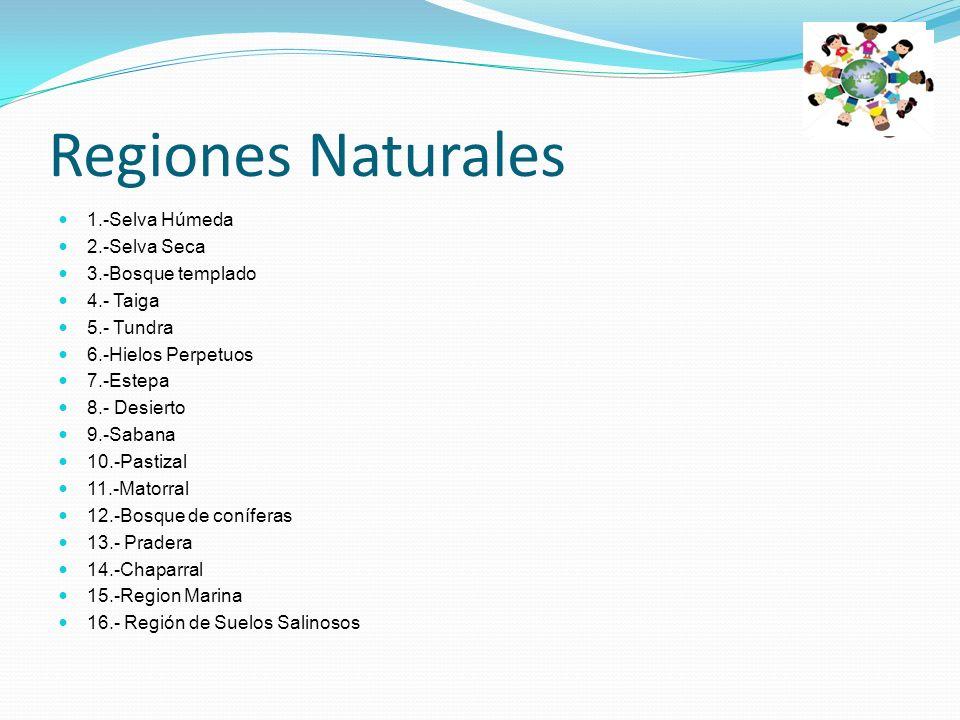 PASTIZAL El pastizal se desarrolla en zonas semiáridas con inviernos fríos y veranos cálidos.