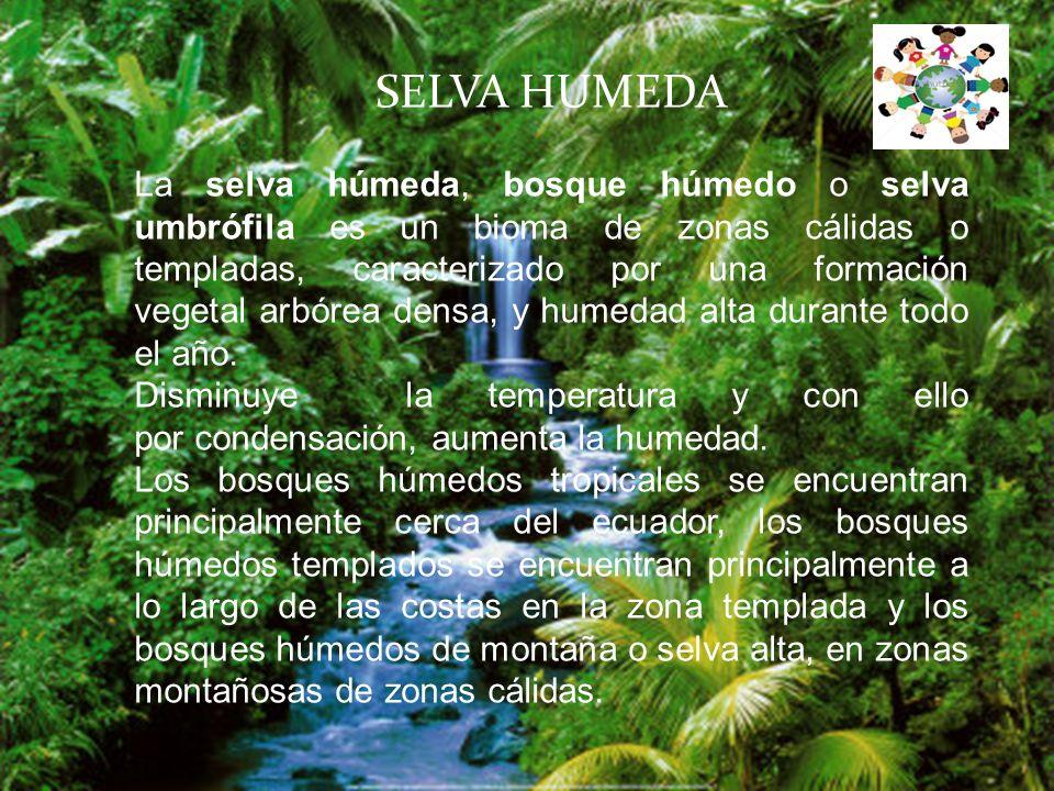 SELVA HUMEDA La selva húmeda, bosque húmedo o selva umbrófila es un bioma de zonas cálidas o templadas, caracterizado por una formación vegetal arbórea densa, y humedad alta durante todo el año.