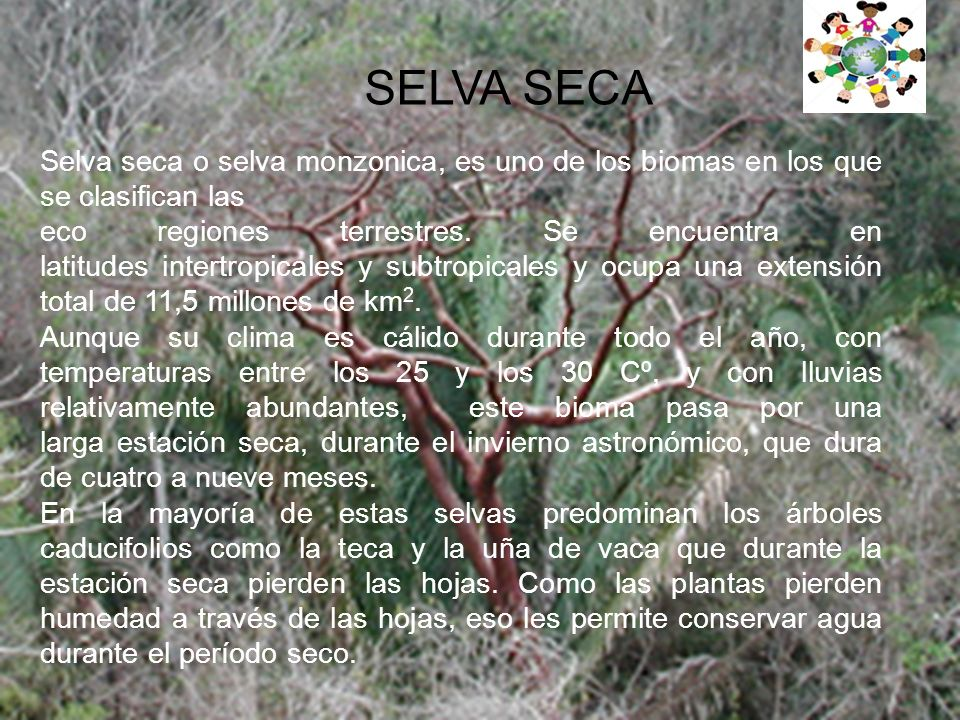 SELVA SECA Selva seca o selva monzonica, es uno de los biomas en los que se clasifican las eco regiones terrestres.