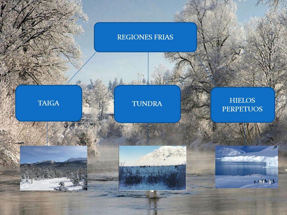 PRADERA Las praderas se ubican generalmente en el centro de los continentes donde la precipitaci ó n pluvial es intermedia (veranos calientes e inviernos fr í os).