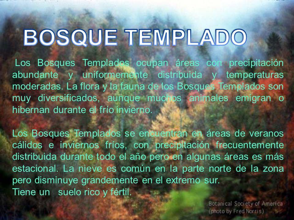 Los Bosques Templados ocupan áreas con precipitación abundante y uniformemente distribuida y temperaturas moderadas.