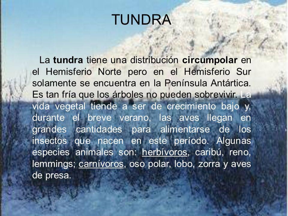 Los Bosques Templados ocupan áreas con precipitación abundante y uniformemente distribuida y temperaturas moderadas. La flora y la fauna de los Bosque