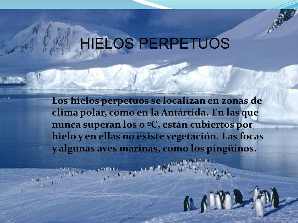 HIELOS PERPETUOS Los hielos perpetuos se localizan en zonas de clima polar, como en la Antártida.
