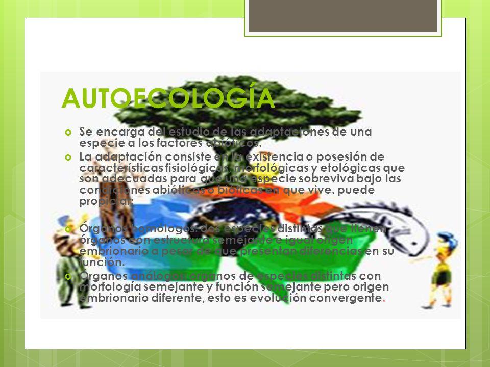 AUTOECOLOGÍA Se encarga del estudio de las adaptaciones de una especie a los factores abióticos. La adaptación consiste en la existencia o posesión de