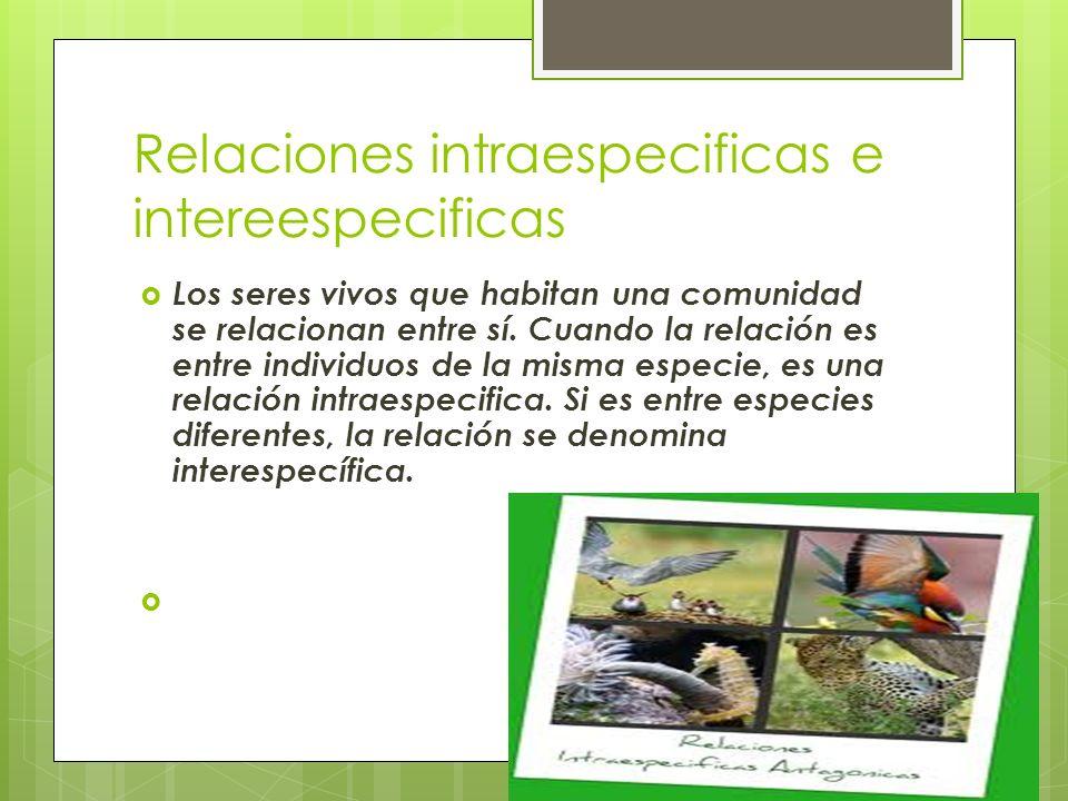 Relaciones intraespecificas e intereespecificas Los seres vivos que habitan una comunidad se relacionan entre sí. Cuando la relación es entre individu