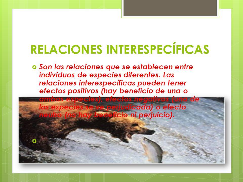 RELACIONES INTERESPECÍFICAS Son las relaciones que se establecen entre individuos de especies diferentes. Las relaciones interespecíficas pueden tener
