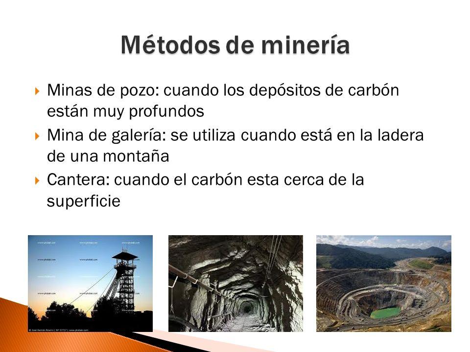 El carbón esta formado de restos de vegetales que quedaron enterrados en zonas poco profundas, como en pantanos o lagos Estos se han ido transformando