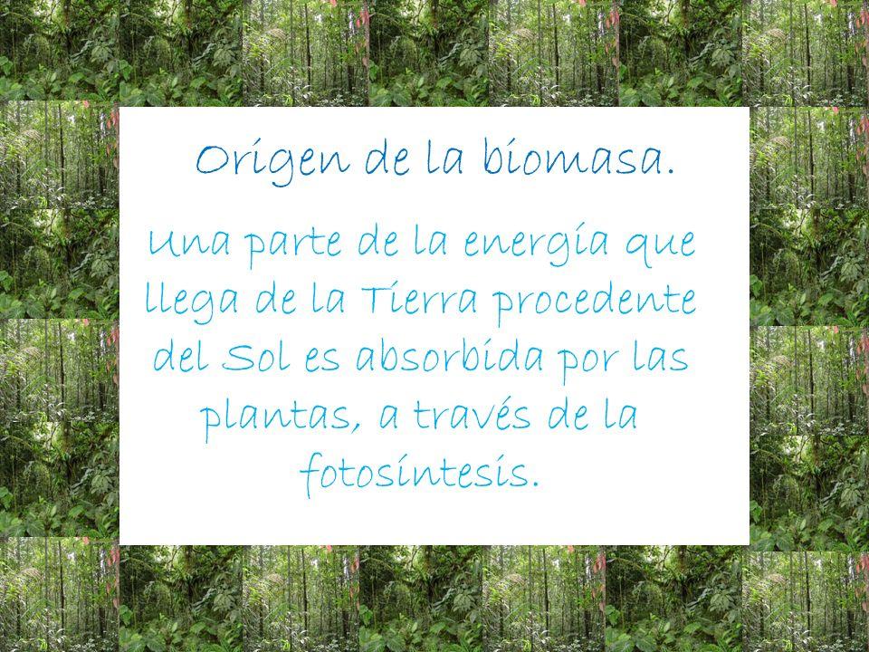 La energía de la biomasa es un tipo de energía renovable procedente del aprovechamiento de la materia orgánica e inorgánica.
