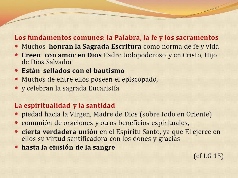 Los fundamentos comunes: la Palabra, la fe y los sacramentos Muchos honran la Sagrada Escritura como norma de fe y vida Creen con amor en Dios Padre t