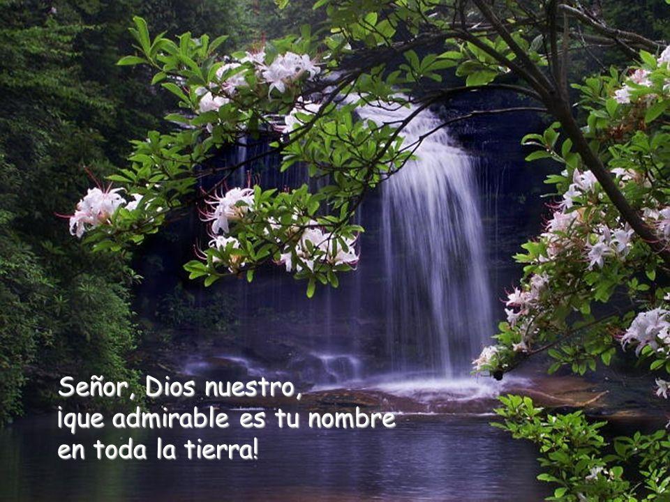 Señor, Dios nuestro, ¡que admirable es tu nombre en toda la tierra!