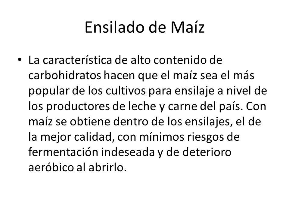 Ensilado de Maíz La característica de alto contenido de carbohidratos hacen que el maíz sea el más popular de los cultivos para ensilaje a nivel de los productores de leche y carne del país.