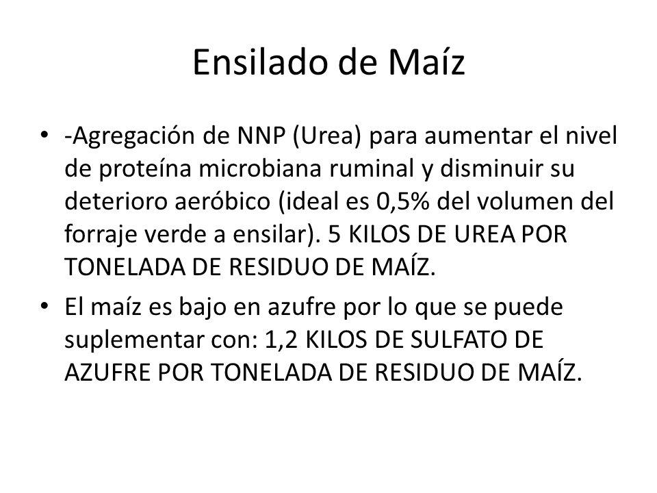 Ensilado de Maíz -Agregación de NNP (Urea) para aumentar el nivel de proteína microbiana ruminal y disminuir su deterioro aeróbico (ideal es 0,5% del volumen del forraje verde a ensilar).