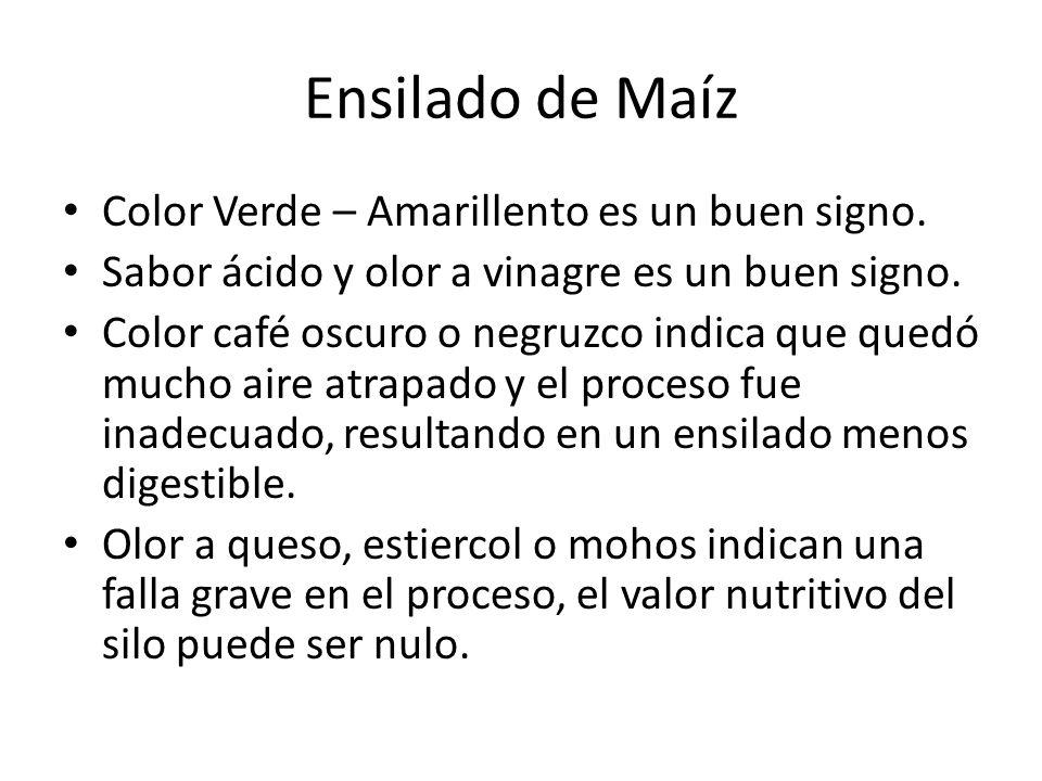Ensilado de Maíz Color Verde – Amarillento es un buen signo. Sabor ácido y olor a vinagre es un buen signo. Color café oscuro o negruzco indica que qu