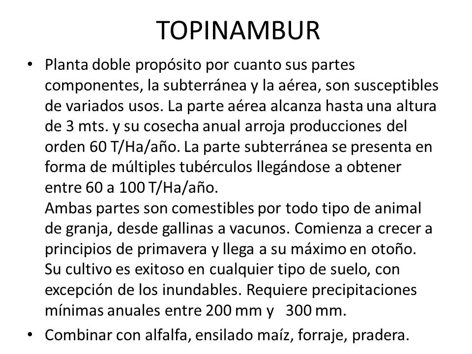 TOPINAMBUR Planta doble propósito por cuanto sus partes componentes, la subterránea y la aérea, son susceptibles de variados usos. La parte aérea alca