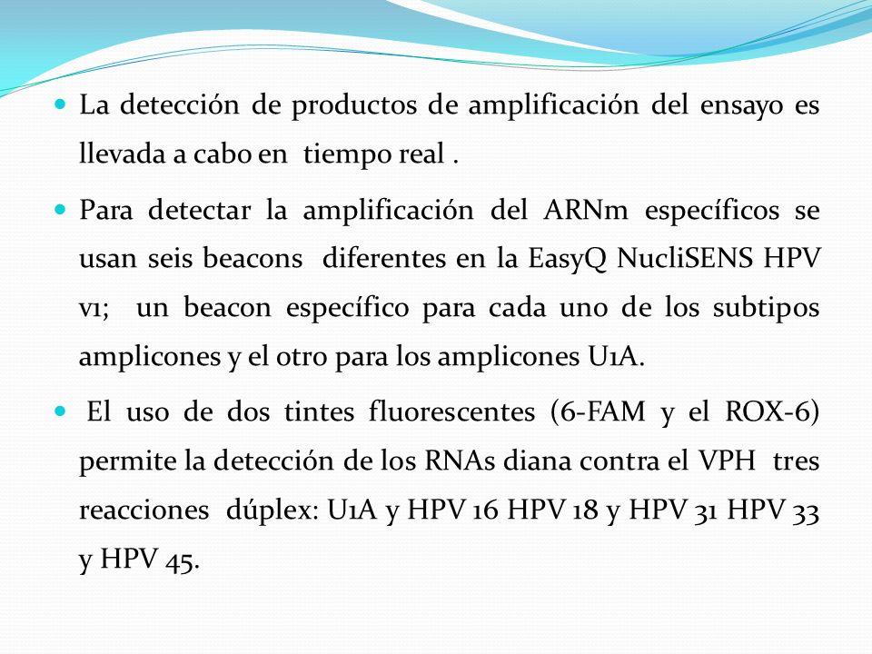 La detección de productos de amplificación del ensayo es llevada a cabo en tiempo real. Para detectar la amplificación del ARNm específicos se usan se