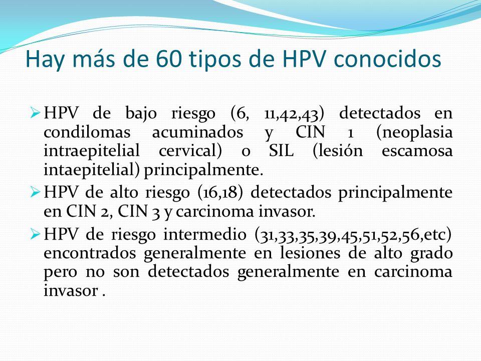 Hay más de 60 tipos de HPV conocidos HPV de bajo riesgo (6, 11,42,43) detectados en condilomas acuminados y CIN 1 (neoplasia intraepitelial cervical)
