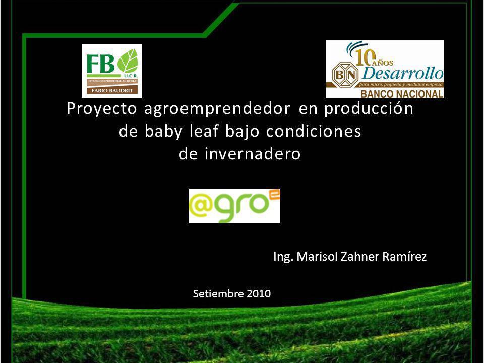 Proyecto agroemprendedor en producción de baby leaf bajo condiciones de invernadero Ing. Marisol Zahner Ramírez Setiembre 2010