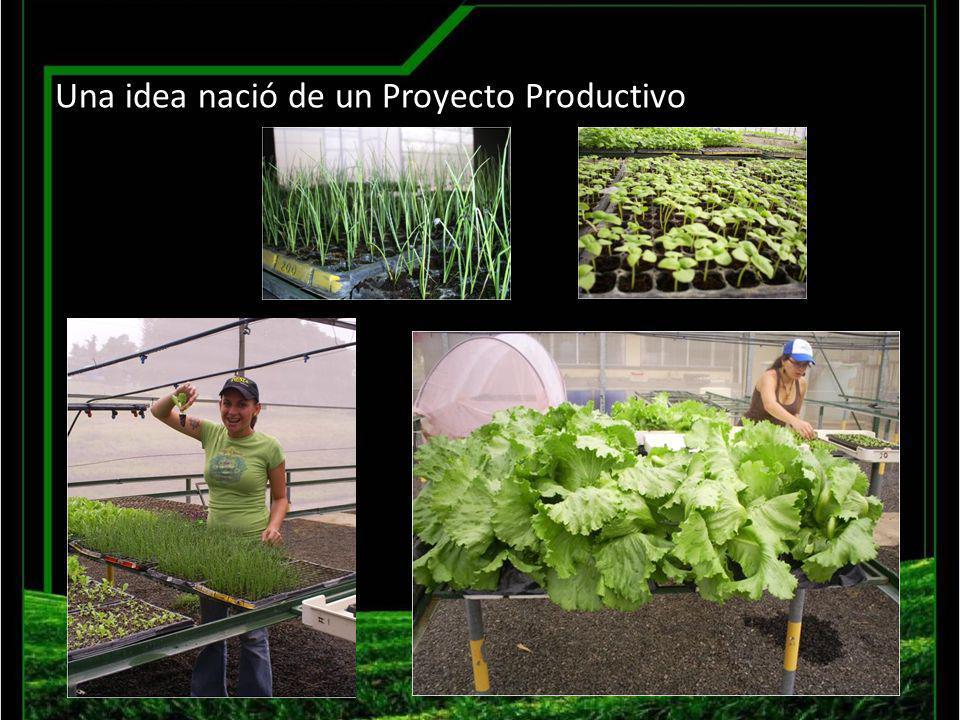 Sistema Productivo de Almácigos Preparación Sustrato Siembra Germinación y Etapa 1 Etapa 2 Selección de material Entrega Cosecha Llenado bandejas Nuestros inicios