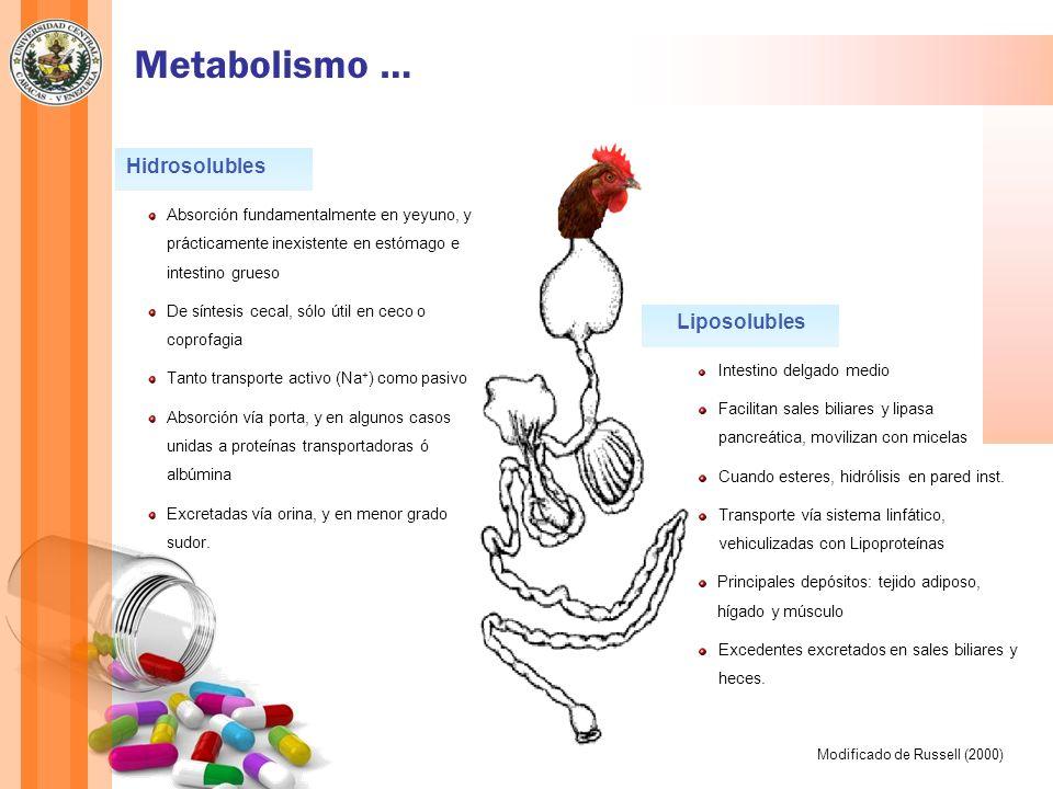 Metabolismo … Liposolubles Intestino delgado medio Facilitan sales biliares y lipasa pancreática, movilizan con micelas Cuando esteres, hidrólisis en