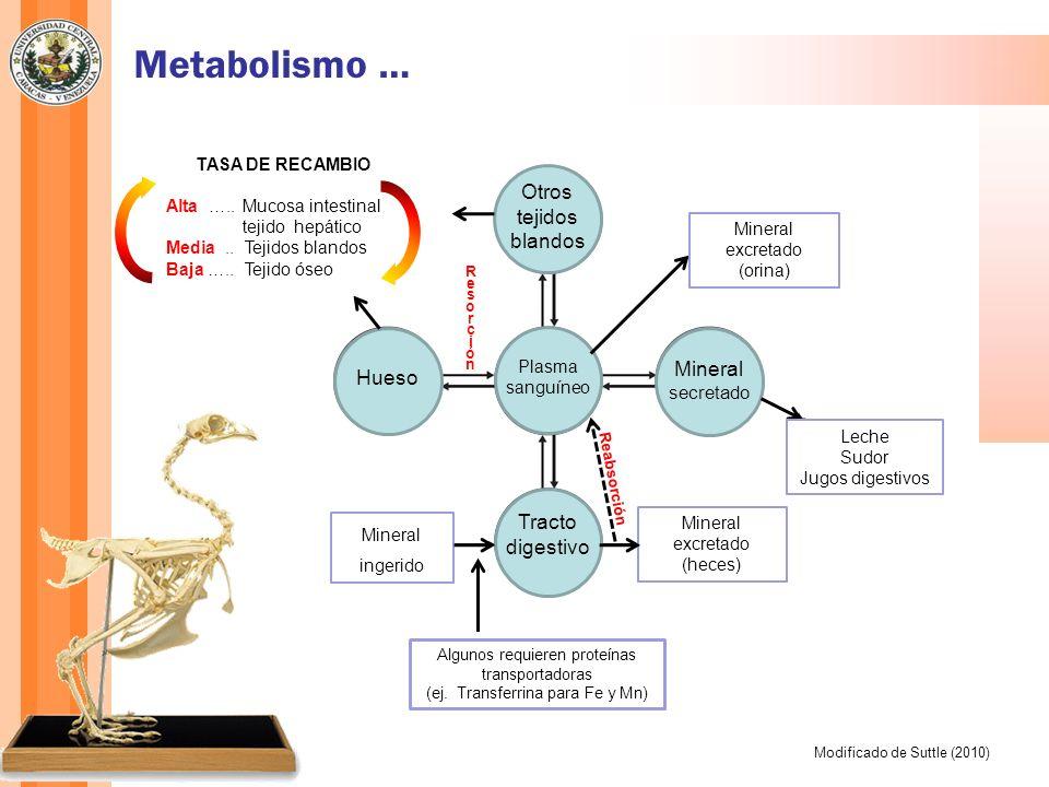 Otros tejidos blandos Hueso Tracto digestivo Plasma sanguíneo Mineral secretado Mineral ingerido Mineral excretado (heces) Metabolismo … Modificado de