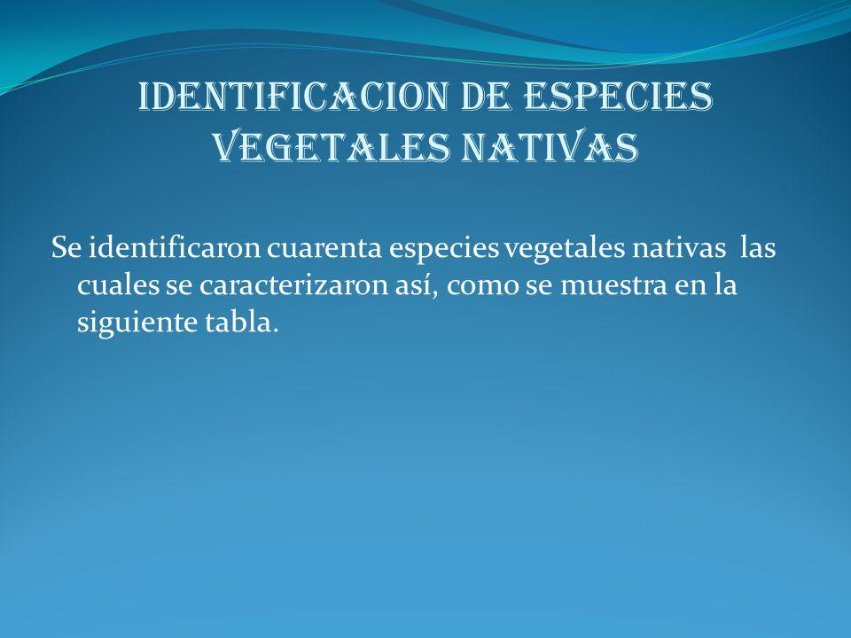 IDENTIFICACION DE ESPECIES VEGETALES NATIVAS Se identificaron cuarenta especies vegetales nativas las cuales se caracterizaron así, como se muestra en