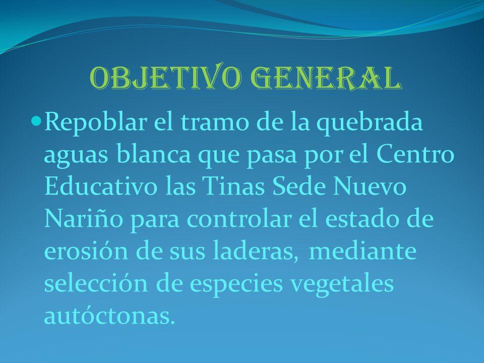 OBJETIVO GENERAL Repoblar el tramo de la quebrada aguas blanca que pasa por el Centro Educativo las Tinas Sede Nuevo Nariño para controlar el estado d