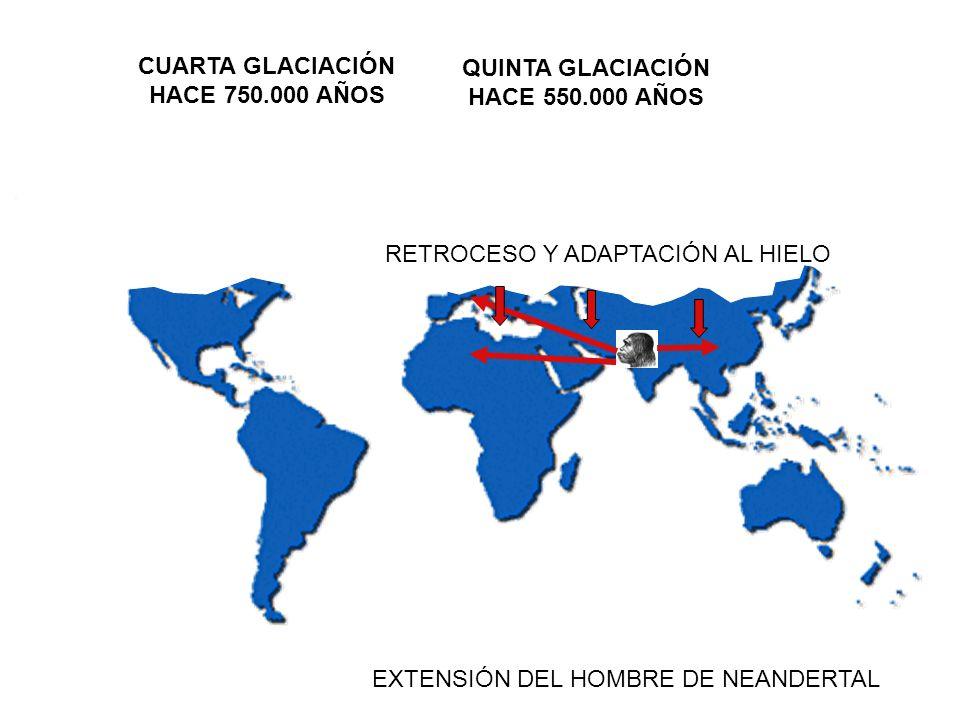 EXTENSIÓN DEL HOMBRE DE NEANDERTAL CUARTA GLACIACIÓN HACE 750.000 AÑOS RETROCESO Y ADAPTACIÓN AL HIELO QUINTA GLACIACIÓN HACE 550.000 AÑOS